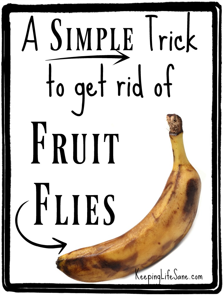Try this simple way to get rid of fruit flies. You probably have all the ingredients in your kitchen already.