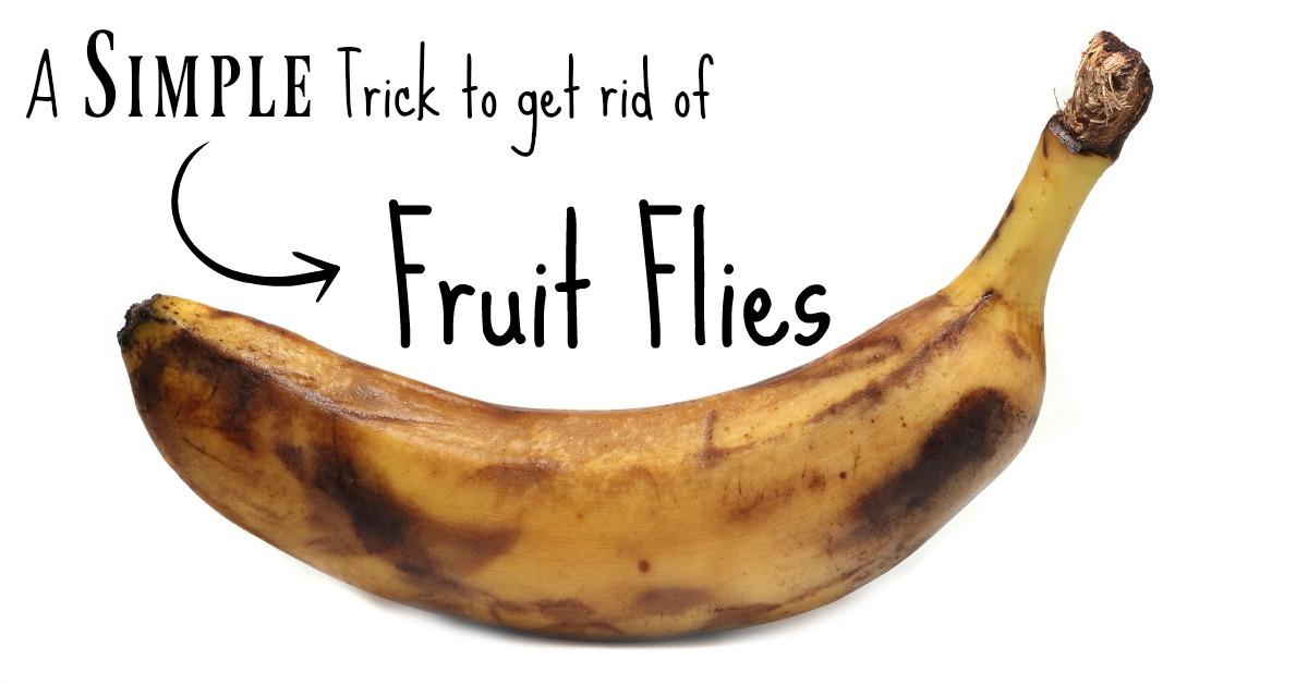 Get rid of fruit flies FAST - Keeping Life Sane