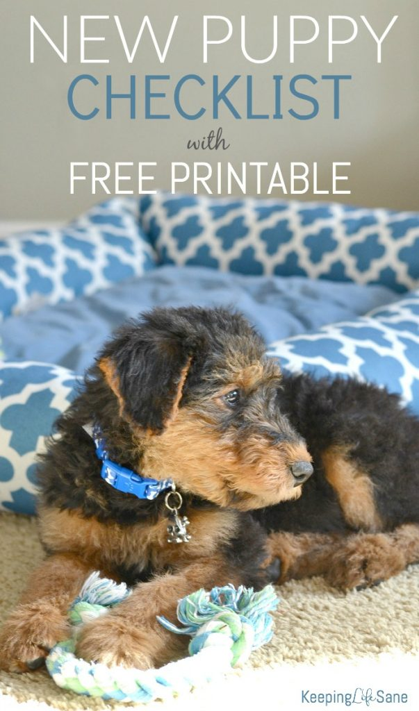 super cute airedale terrier puppy sitting with blue bed in background and rope chew toy