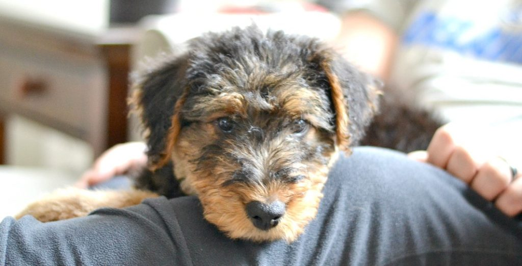 Should I get a dog for my family? After looking at this cute face you'll want one, but you really need to think hard and make sure it's the right decision for your family.
