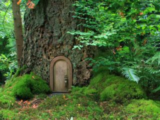 Forest with green leaves and a tree with a small fairy door