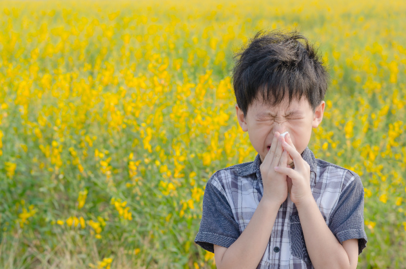 boy in field with a bunch of yellow wild flowers sneezing with his eyes closed