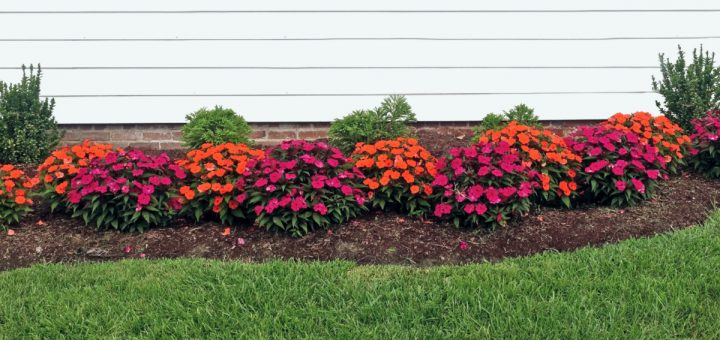 flower bed against house with white siding with lots of beautiful orange and pink flowers